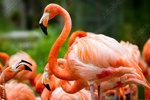Cadres-photo bureau Flamingo Pink flamingo