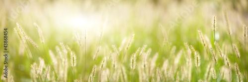 swieza-zielona-trawa