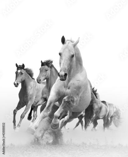 Obraz w ramie horses in sunset