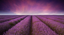 Stunning Lavender Field Landsc...