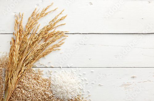 Fotomural paddy and rice