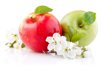 FototapetaTwo red and green apples with leaves and flowers on a white back