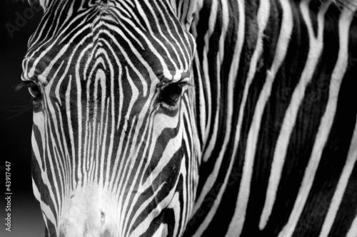 Recess Fitting Zebras