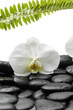 Macro of white orchid with fern on pebble