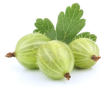 Green Gooseberry Fruit With Le...