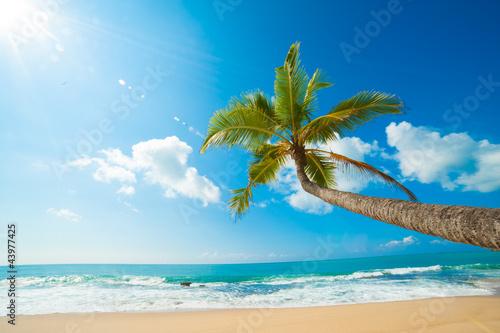 Obraz Tropikalna plaża - fototapety do salonu