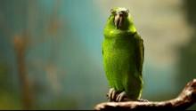 Green Parrot In Blured Backgro...