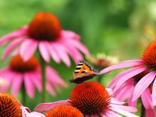 Blumenfröhlich