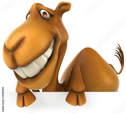 Fotografia, Obraz Fun camel