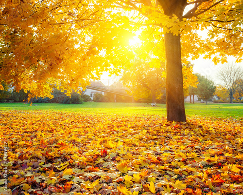 Poster Oranje Sunny autumn foliage
