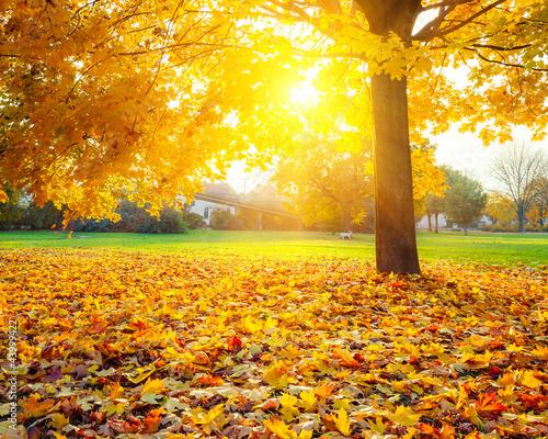 Foto-Lamellen - Sunny autumn foliage