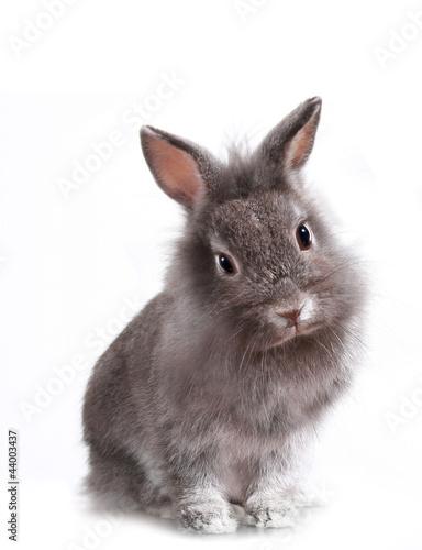 Fotografie, Obraz  Young Adorable Little Bunny Rabbit