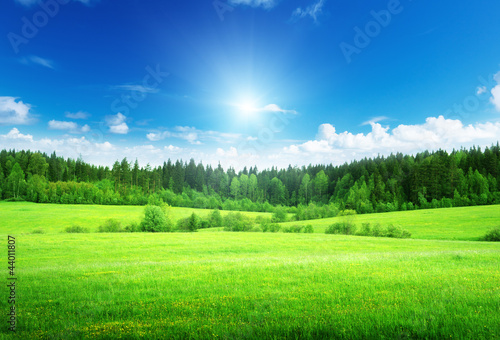 Foto op Plexiglas Weide, Moeras field of grass and perfect sky