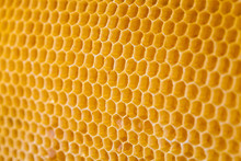 Bee Honey In Honeycomb Angle V...