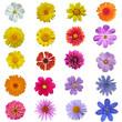 Leinwandbild Motiv freigestellte Blüten