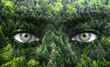 Green Forest And Human Eyes - Save Nature Concept