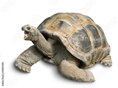 Poster Tortue Tierportrait einer Riesenschildkröte