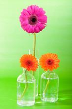 Blumen In Vasen