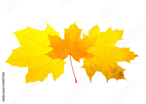 Fototapety, obrazy: Heap of autumn leaves isolated on white
