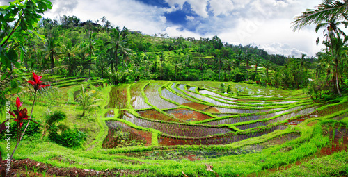 Deurstickers Indonesië beautiful rice teracces - Bali