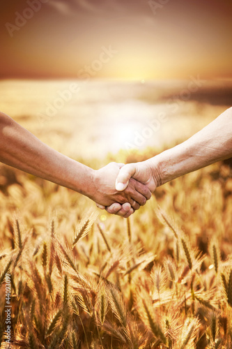 Fotografía  Two farmer's hands handshake at the harvest of wheat field.