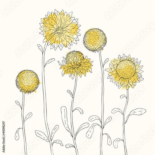 Tuinposter Abstract bloemen Yellow sunflowers on white background. Vector illustration