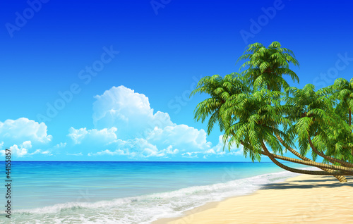 Foto-Leinwand - Palms on empty idyllic tropical sand beach.