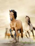 horses in sunset - 44169465