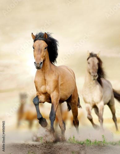 Foto  horses in sunset