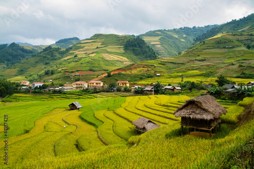 Garden Poster Rice fields Rice Terraces