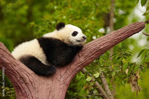 Stickers pour porte Panda Sleeping giant panda baby