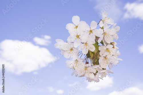 Aluminium Prints Blue sky Flowers soaring against blue sky