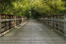 Summer Trail Scene