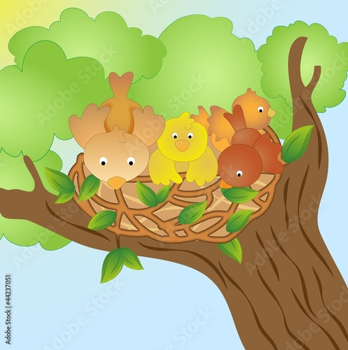 Poster Vogels, bijen Nest of birds