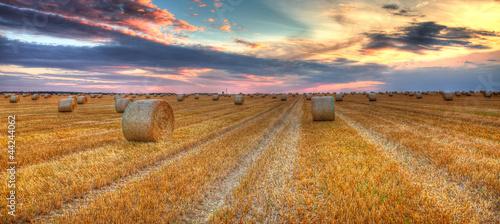 Foto auf Gartenposter Kultur Sunset over the field