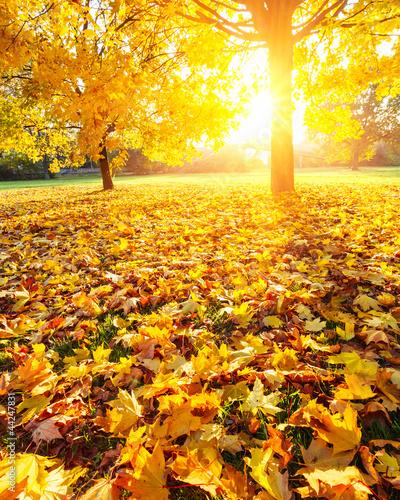 Foto-Duschvorhang - Sunny autumn foliage