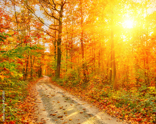 Poster Oranje eclat Pathway in the autumn forest