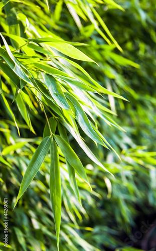 Doppelrollo mit Motiv - Fresh green bamboo backplate