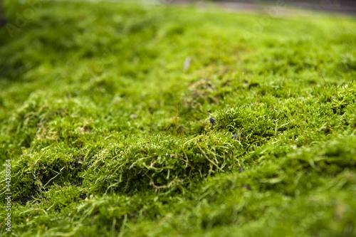 Fotografie, Obraz  moss on stone