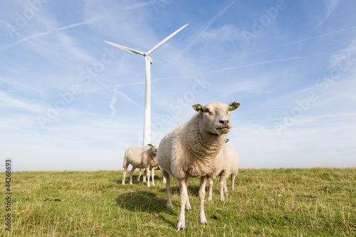 Windmill and sheep in the Netherlands Fototapete