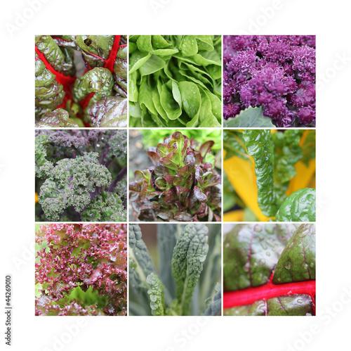 Gemüsegarten © Atelier Ṁ