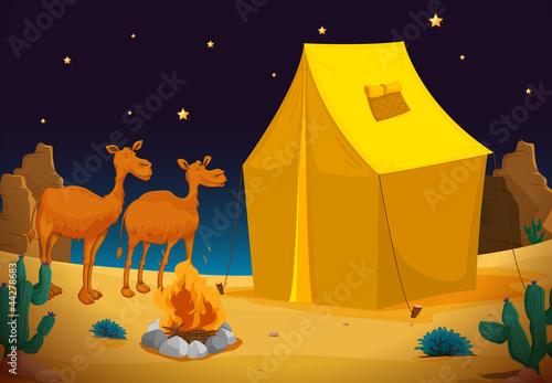 Fotobehang Indiërs camels and tent