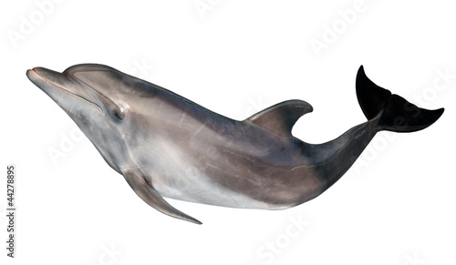 Poster de jardin Dauphins grey doplhin isolated on white