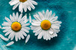 canvas print picture Daisies floating in water