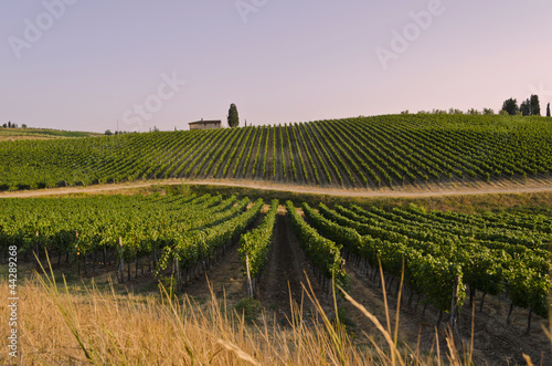 Fotobehang Wijngaard Sunset over Tuscan vineyards