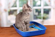 Small Gray Kitten In Blue Plas...