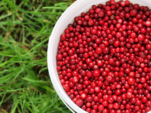Cranberries In A Bucket