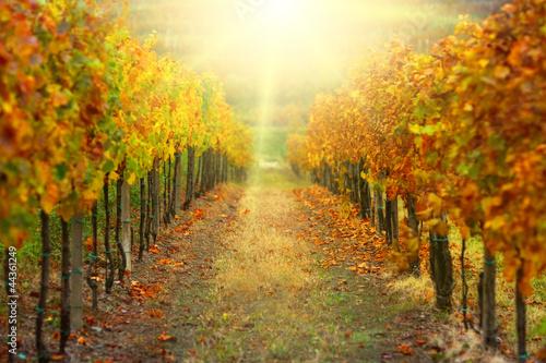 Tuinposter Wijngaard Autumn vineyard