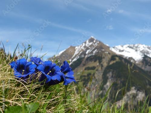 Deurstickers Alpen Enzian Blumen der Alpen