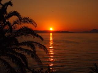 Zachód słońca pod palmą